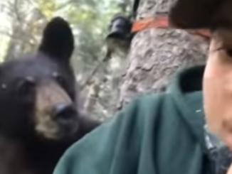Bear surprises hunter.
